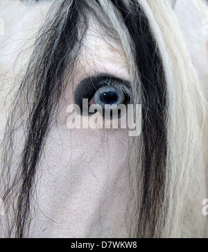 Wild Horse on the Offa's Dyke Trail in the Brecon Beacons - Stock Photo