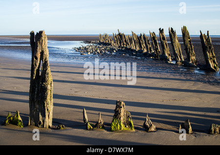 Rows of old rotting wooden poles sticking out of the sand on a beach during low tide. Low sun long shadows blue - Stock Photo