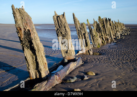 A row of old rotting wooden poles sticking out of the sand on a beach during low tide. Low sun long shadows blue - Stock Photo