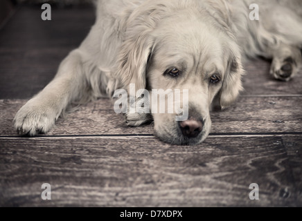 Friendly dog waiting for his busy master - Stock Photo