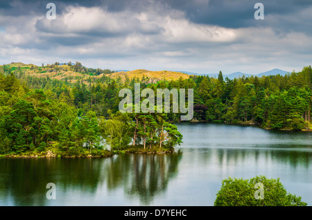 Tarn Hows surrounded by forest in the Lake District near Coniston, Cumbria, England. - Stock Photo