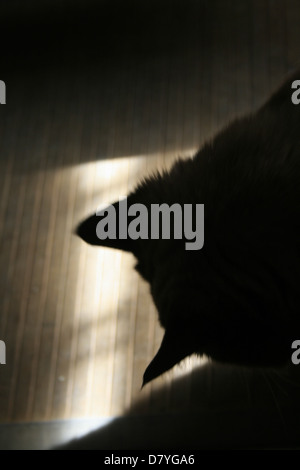 dark shadow of cat looking out of window - Stock Photo