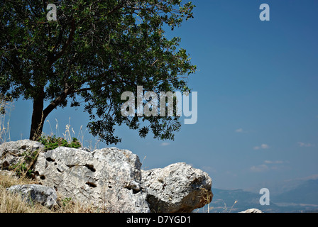 Lonely tree on the rocks against the clear blue sky on a sunny summer day. - Stock Photo