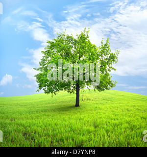 Green tree in a spring field against the sky - Stock Photo