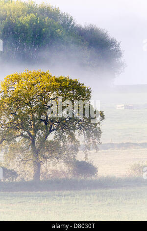 Northampton, UK. 16th May 2013. Low laying mist over the river Nene early this morning in the Nene Valley. Credit: - Stock Photo