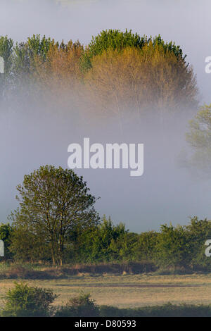 Northampton 16th May 2013. Low laying mist over the river Nene early this morning in the Nene Valley - Stock Photo