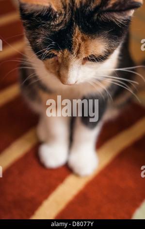 A cat on a rug looking down. - Stock Photo