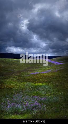 Flowers growing in rural field under storm clouds