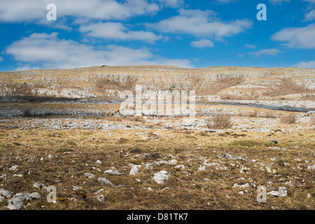 Rough calcareous grassland and limestone pavement in the Burren, County Clare, Ireland - Stock Photo
