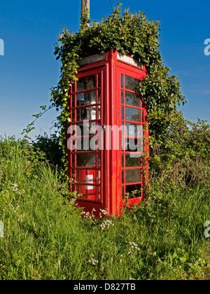 Overgrown Rural Red Telephone Box, Reedham, Norfolk, England - Stock Photo