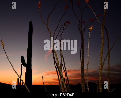 Ironwood Forest National Monument at sunset in the Sonoran Desert near Eloy, Arizona, USA. - Stock Photo
