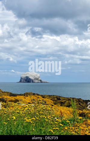 Bass Rock, home to a large gannet colony, near North Berwick, East Lothian, Scotland, United Kingdom, Europe - Stock Photo