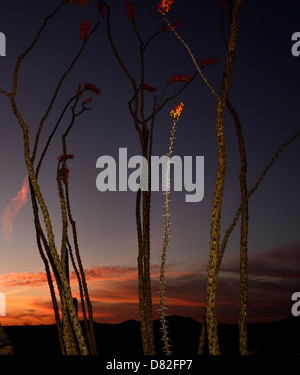 Ironwood Forest National Monument at sunset in the Sonoran Desert near Eloy, Arizona, USA - Stock Photo