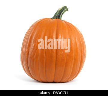 Large pumpkin isolated on white background - Stock Photo