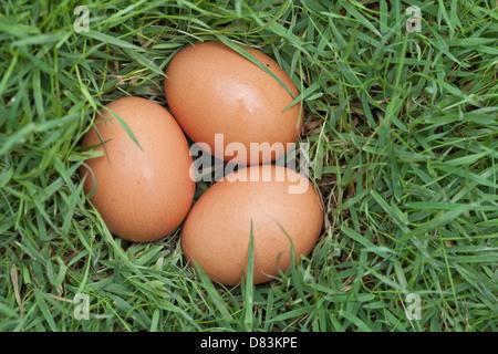 3 eggs on green grass. - Stock Photo