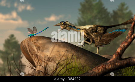 An Archaeopteryx stalks a dragonfly on a rock. - Stock Photo