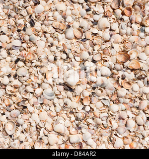 Background from shells in the sand . - Stock Photo