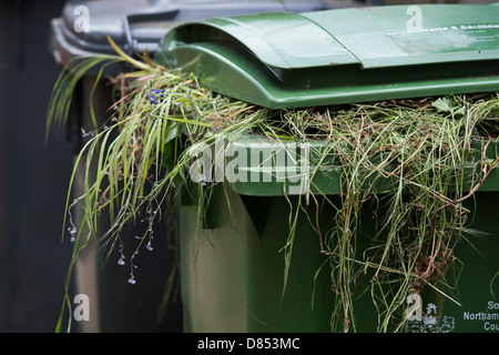 Garden waste in a green wheelie bin. England - Stock Photo