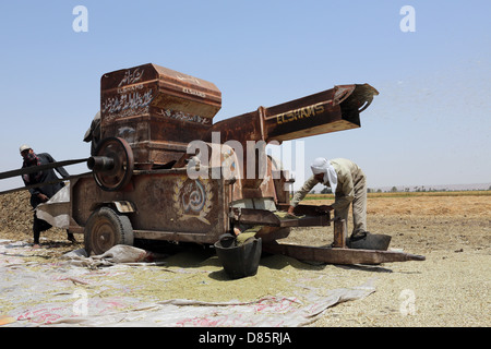 Thresher in a wheat field in Upper Egypt - Stock Photo