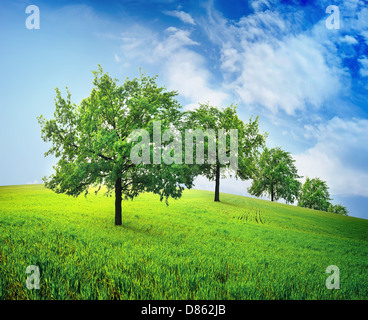 Green trees in a spring field against the sky - Stock Photo