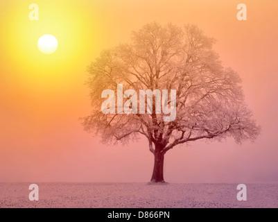 Lone oak tree in field. Wilsonville, Oregon - Stock Photo