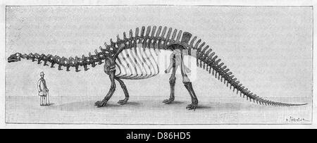Dinosaur Apatosaurus - Stock Photo