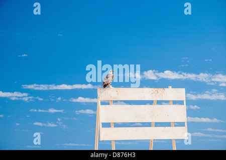 wild beautiful eagle in front of a blue sky - Stock Photo