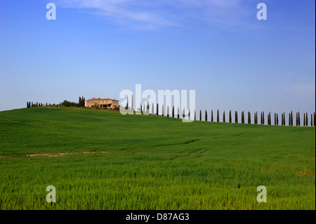 italy, tuscany, val d'orcia, wheat fields, cypress trees and house - Stock Photo