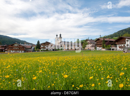 Buttercups in full blossom on the village green of Hopfgarten, an authentic Tyrolean village with traditional mountain - Stock Photo