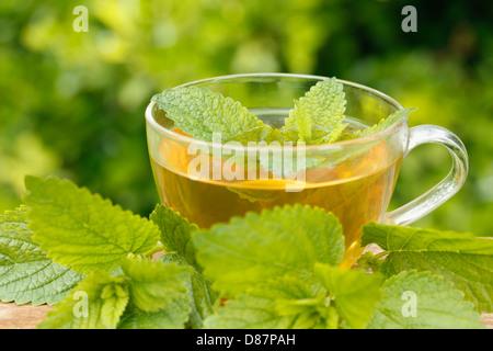 Lemon balm tea. Melissa officinalis - Stock Photo