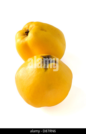 Two golden quinces isolated on white background - Stock Photo