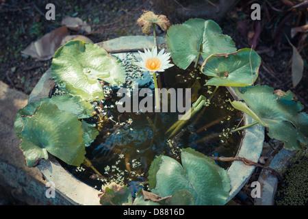 buddhist singles in holly pond 115 turkey hop rd - holly pond, al asking price: $98,00000 115 turkey hop rd, holly pond, al 35083.