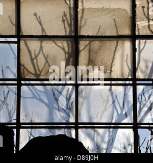 Sunlight through broken factory window and abstract tree branches silhouette. - Stock Photo
