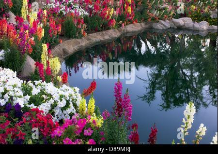 Flower garden at pond side. Palm Desert, California - Stock Photo