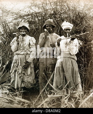 Sugar Cane Cutters, Jamaica, ca 1890, by A. Duperly and Sons - Stock Photo