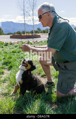 Man and three month old Bernese Mountain Dog puppy. A working breed and herding farm dog originally from Switzerland. - Stock Photo