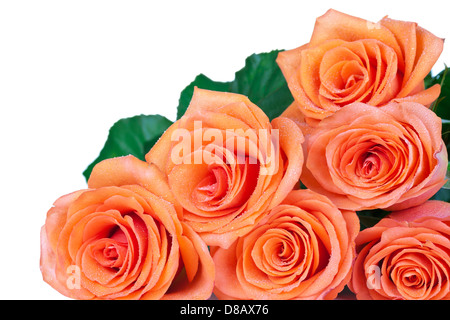 Tea roses bouquet with dew drops isolated on white background. Copy space - Stock Photo