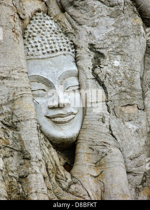Head of buddha image in the root of bodhi tree in Ayutthaya, Thailand - Stock Photo