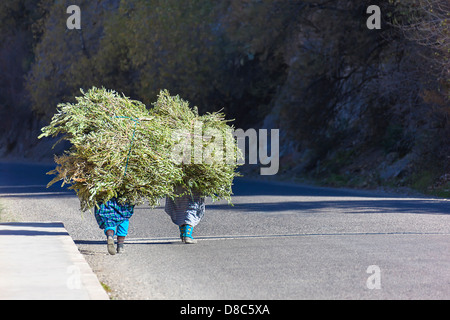 Two farmer woman walking with their load of grass. - Stock Photo