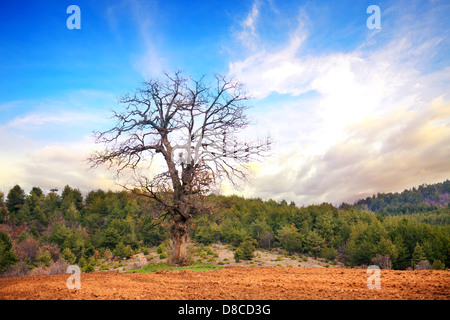 colorful sunset over the oak tree - Stock Photo