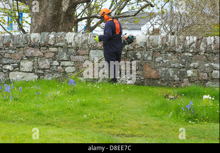A Gardener man using a strimmer   strimming around wildflowers and stone wall. - Stock Photo