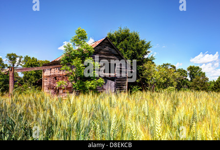 Old abandoned barn and wheat in a rural North Georgia landscape. - Stock Photo