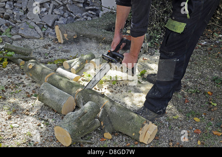 Tree care services - Stock Photo