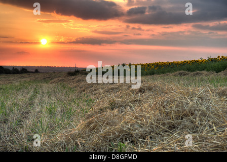Field with hay on a background sunset - Stock Photo