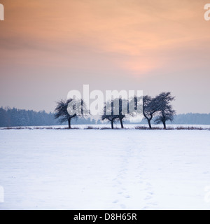 Trees at the edge of the field in winter - Stock Photo