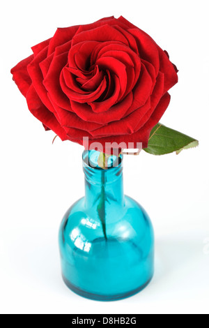 Red rose in blue vase - Stock Photo
