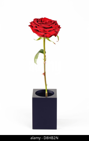 Single tall red rose - Stock Photo