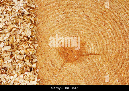 Growth rings on freshly cut fir tree with saw dust border good background for the lumber industry - Stock Photo