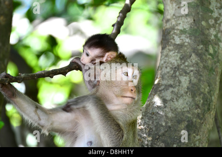 Monkey mother and baby - Stock Photo
