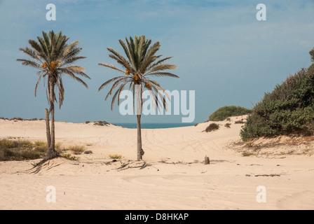 Israel. Two palm trees on a Sandy beach at Nitzanim, near the city of Ashkelon